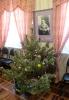 Рождественские праздники_4